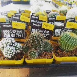 Cacti Collectables