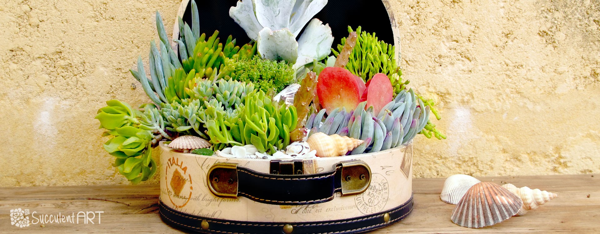 How to make a Succulent Under the Sea Chest