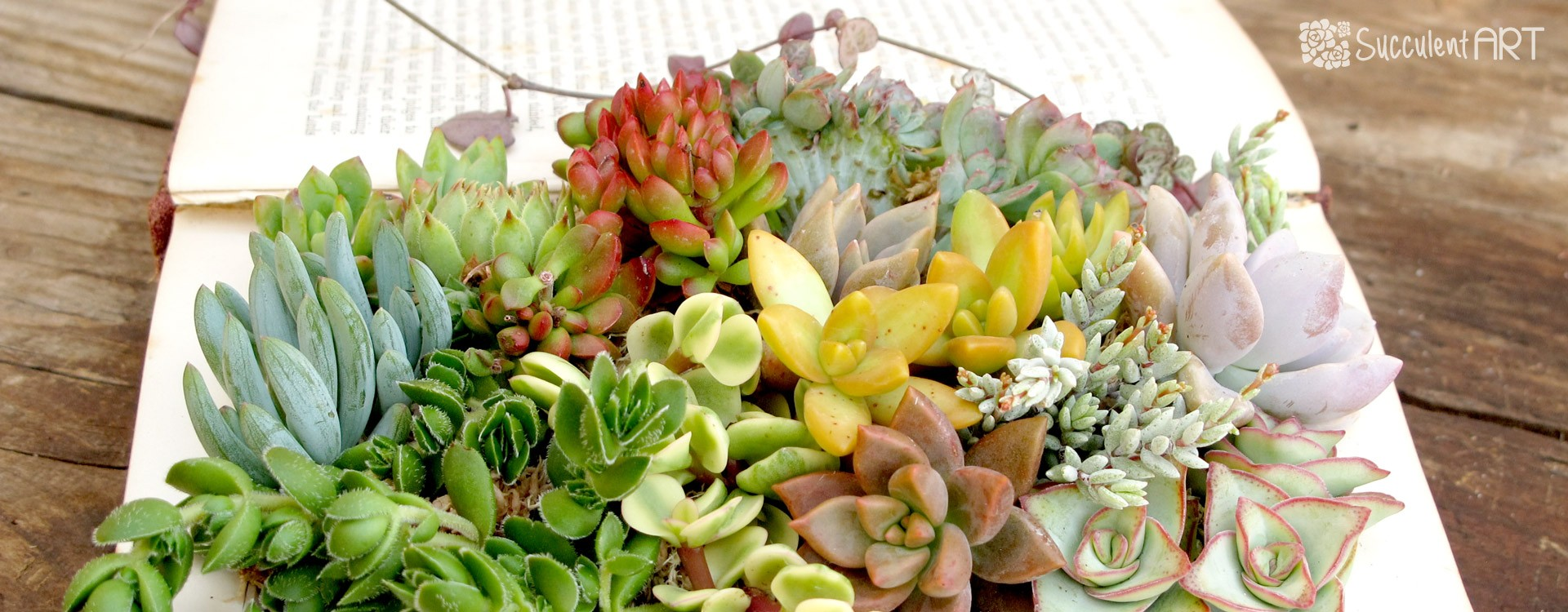 How to make a Succulent Book