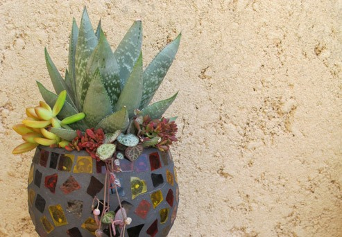 Potting Succulents into Containers without Drainage