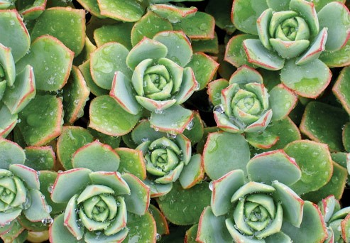 How to Prepare your Succulents for Winter